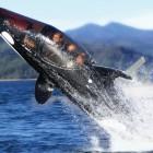The Killer Whale Submari...