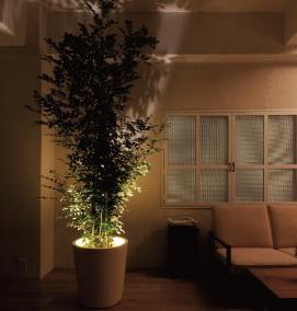 Forestarium Lamp light