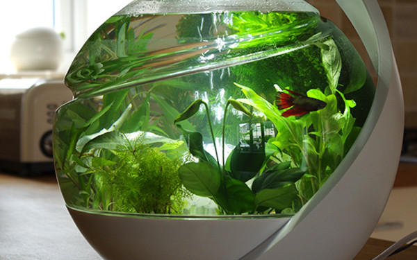 Avo self cleaning fish tank hispotion for Self cleaning betta fish tank