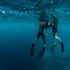 Learning to Freedive wit...