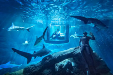 Airbnb-shark-tank-aquarium-contest
